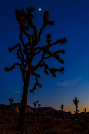 Moon at Joshua Tree