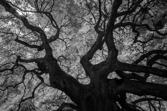 Angel Oak Infrared