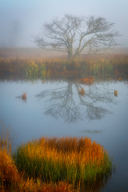 Lone Tree & Pond