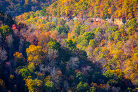 Cloudland Fall Colors