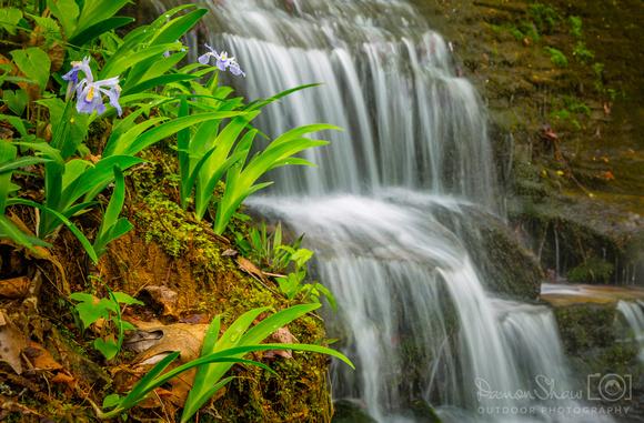 Hidden Irises