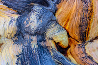 Bristlecone Pine Bark Abstract