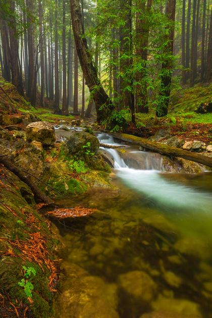 Limekiln Redwoods