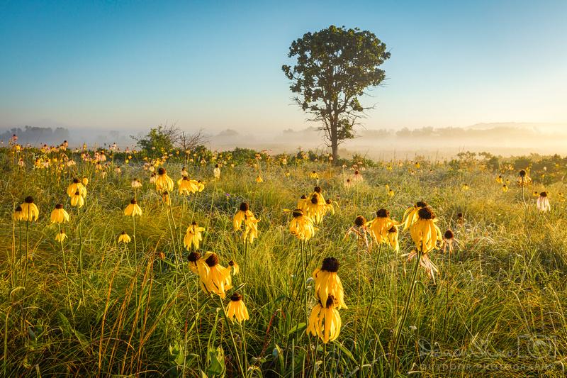 Cherokee Prairie